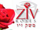 Ziv Roses  זיו רוזס משק זיו