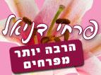 פרחי דניאל