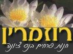 רוזמרין - משלוחי פרחים בנס ציונה