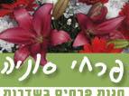 פרחי סוניה