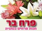 משלוחי פרחים נתניה - פרח בר