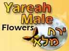 Yareah Male Flowers